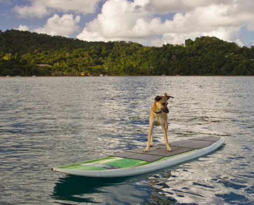 Stand Up Paddle Fiji by our Resort DOG