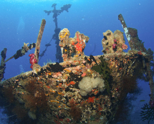 Wreck Diving Fiji Underwater Growth