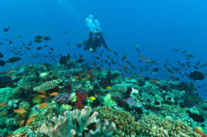 Fiji-Dive-Sites-Waidroka-Aquarium