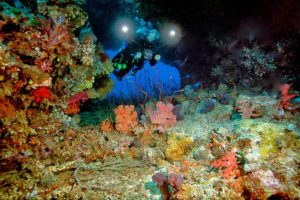 Fiji-Dive-Sites-Waidroka-Golden-Arches