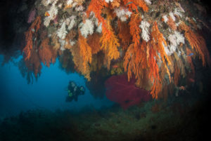 Fiji-Dive-Sites-Waidroka-Seven-Sisters