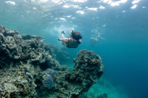 Fiji Activities Snorkeling Waidroka