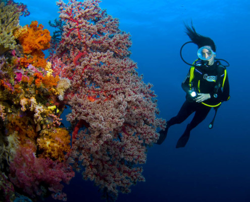 Fiji Dive Diver on Soft Coral Wall