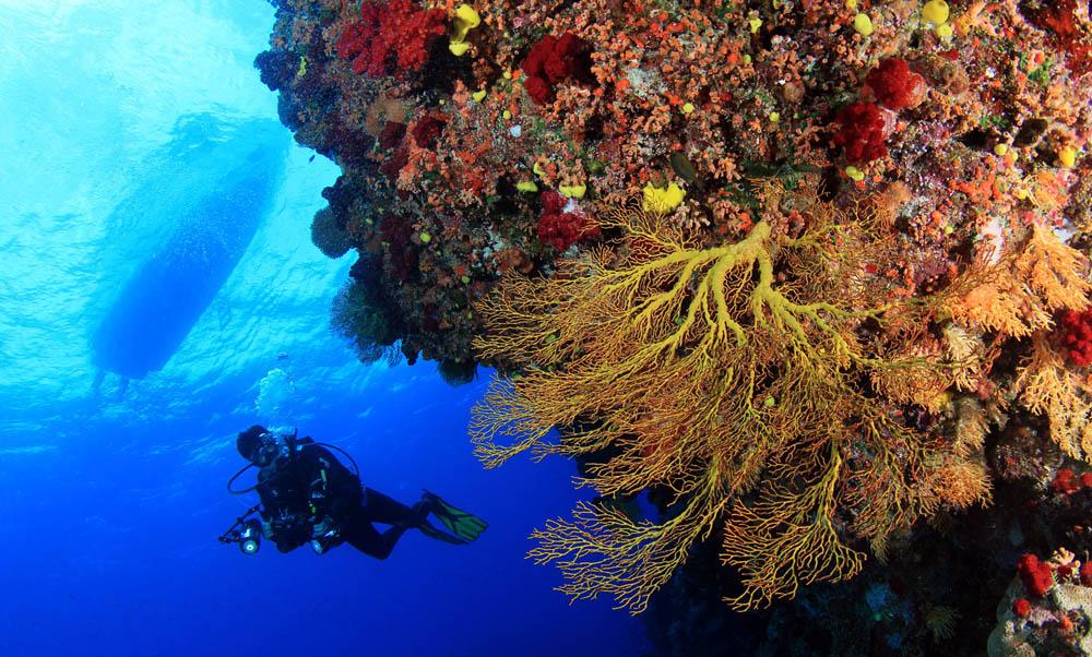 Scuba Dive Fiji Soft Coral with Boat Shilouette